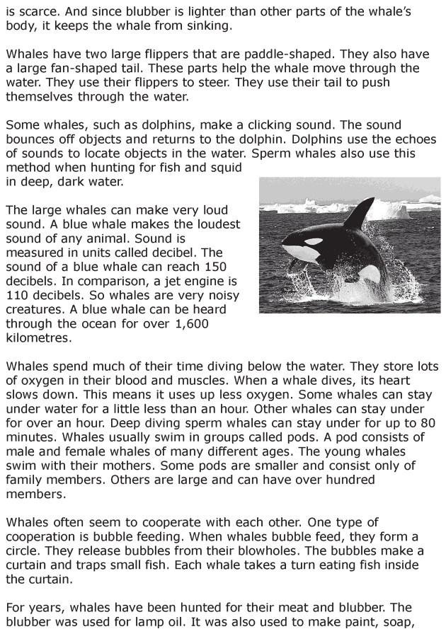 Grade 6 Reading Lesson 22 Nonfiction - Whales (2)