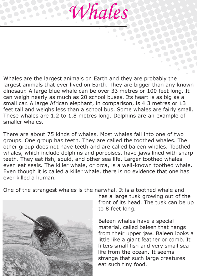 Grade 6 Reading Lesson 22 Nonfiction - Whales