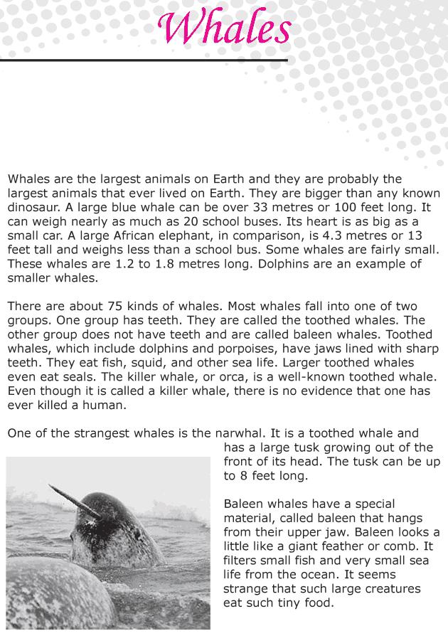Grade 6 Reading Lesson 22 Nonfiction - Whales